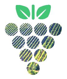 Castellino-uva-icona