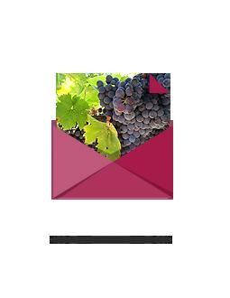 Vino-Castellino-Contatti